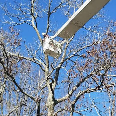 Briscoe Tree Service specializes in trimming or pruning your trees and bushes