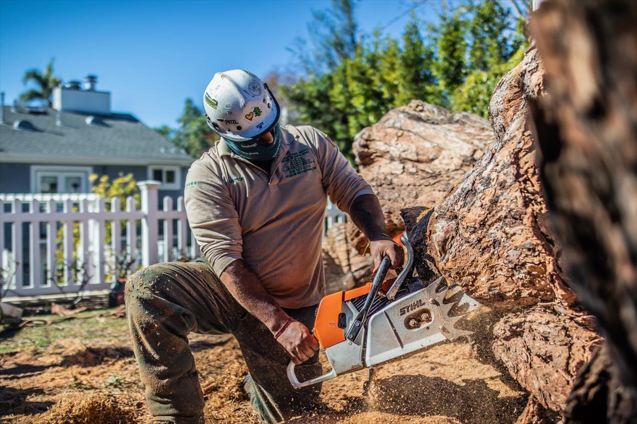 Tree Removal and Stump Grinding Services