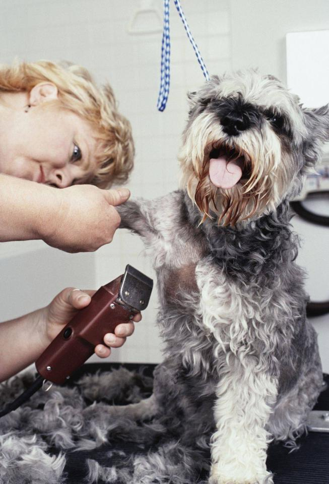 DCC will work with you to make a customized cleaning plan to clean your Dog Salon.