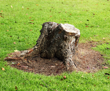 Ashville Tree & Stump Removal