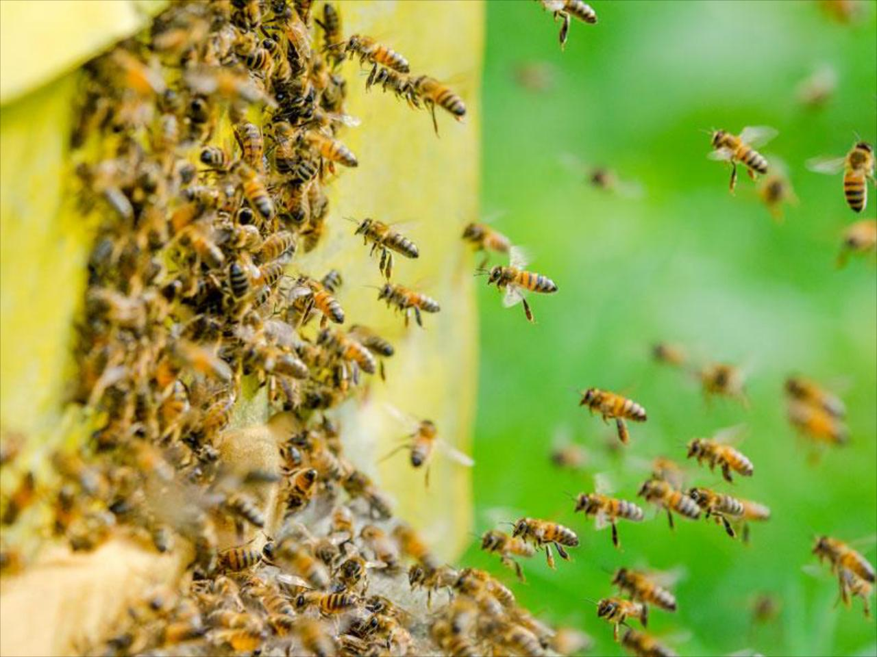 BEE REMOVAL SERVICES IN GREATER FORT MYERS, FL