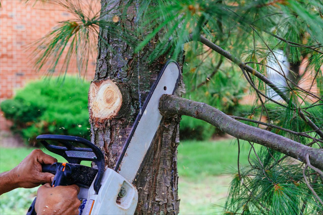 Brush Cutting, Rough Field Cutting & Mowing, Light Tree pruning(below 12 ft) Tree Removal, & Debris Relocation