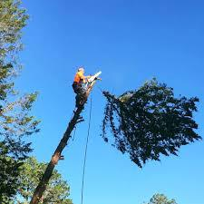 Keep your trees full and healthy with professional tree trimming services fromWarthog Landscaping And Excavating.