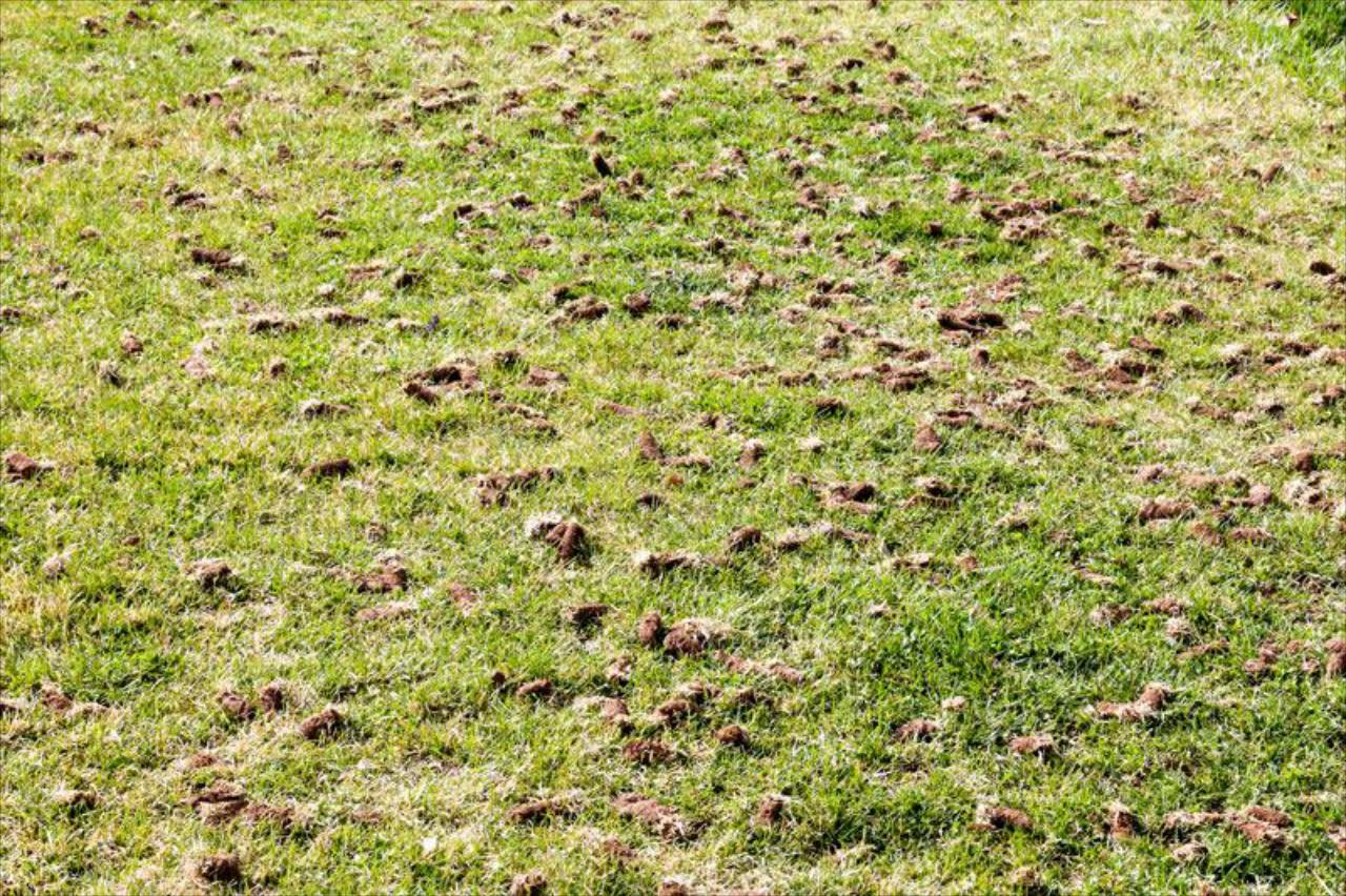 How Do I Know if My Lawn Needs an Aeration?
