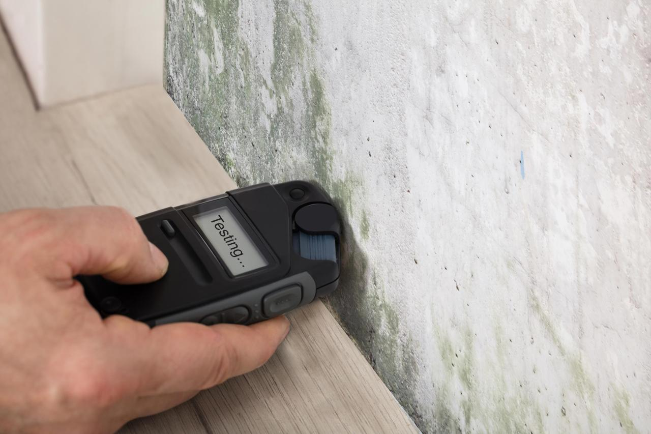 How Do You Know if You Have Mold Damage in Your Home?