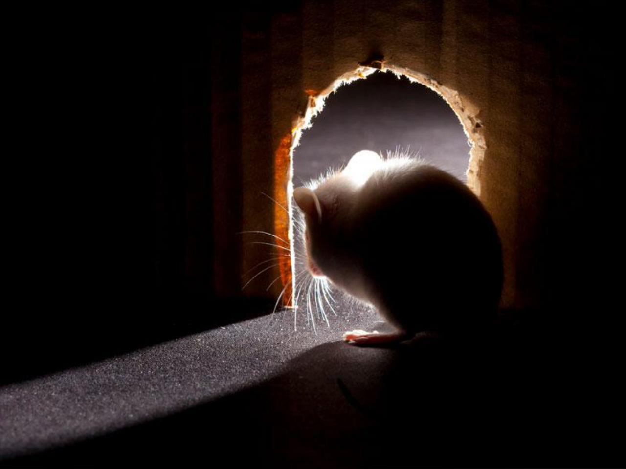 Rodent Services for Residential or Commercial
