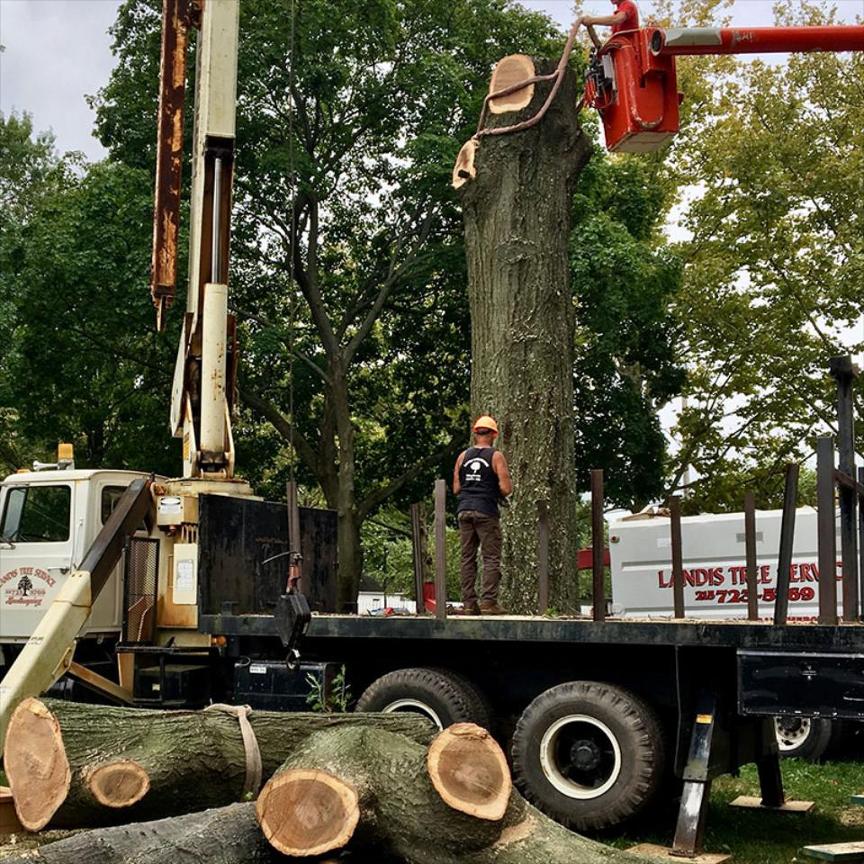 Bad storm came through? Lightning strike part of your tree? Do you have an old damaged tree? We can meet any needs you have!