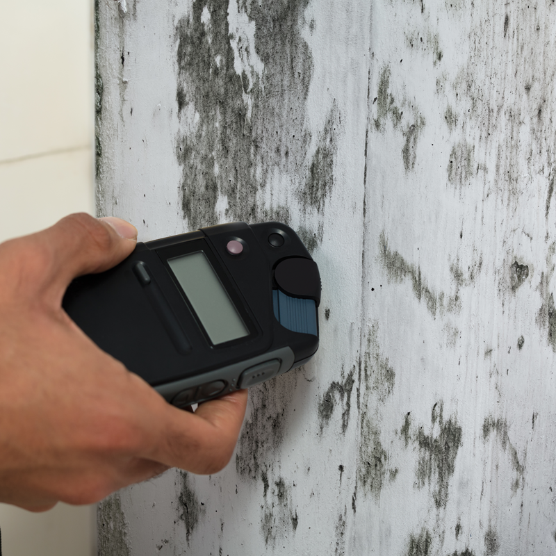 Mold and Moisture Inspections in Roslyn Heights, NY