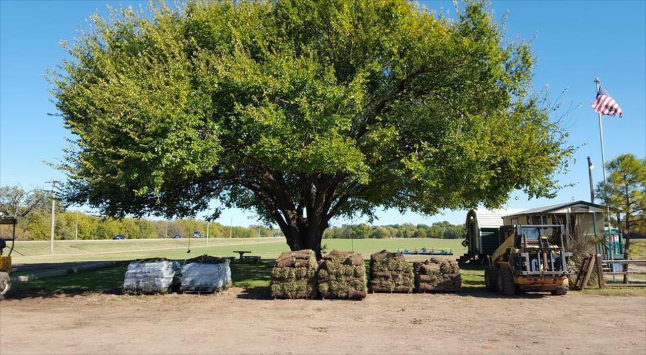 Sod Farm, Delivery & Installation