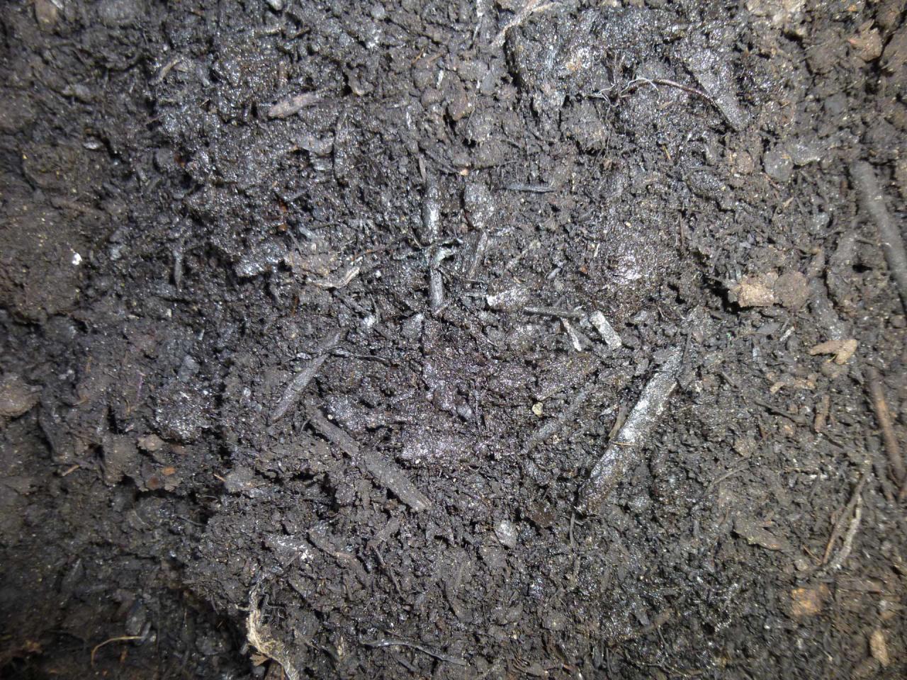 Cedar Grove fine compost