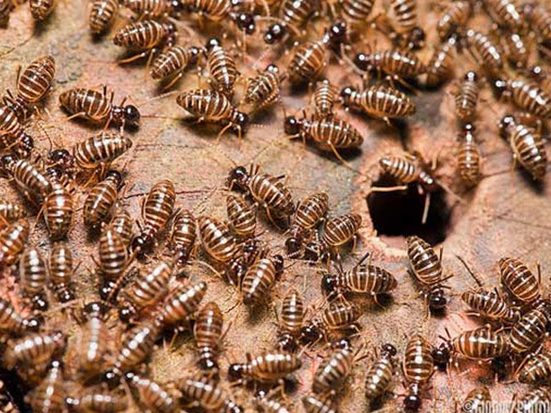 A TERMITE INSPECTION CAN SAVE YOUR HOME OR BUSINESS.