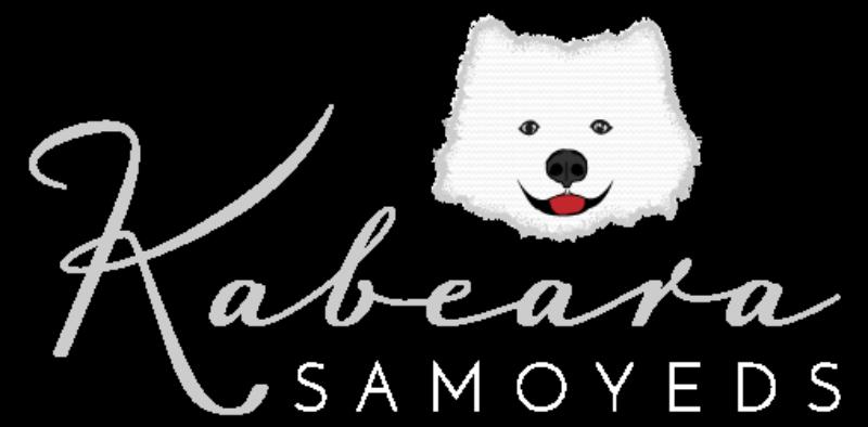 Kabeara Samoyeds
