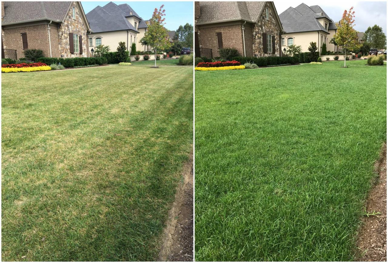 GET YOUR LAWN LOOKING LIKE A GOLF COURSE