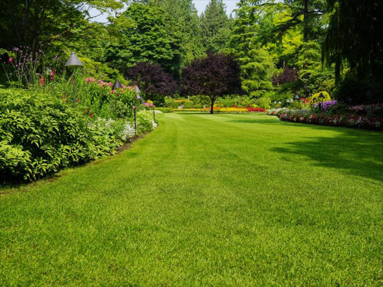 Lawn and Ornamental Services