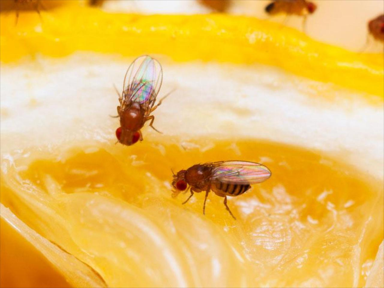 Fruit Fly Service