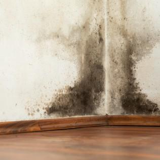 Who Offers Mold and Radon Testing in Des Moines, IA?