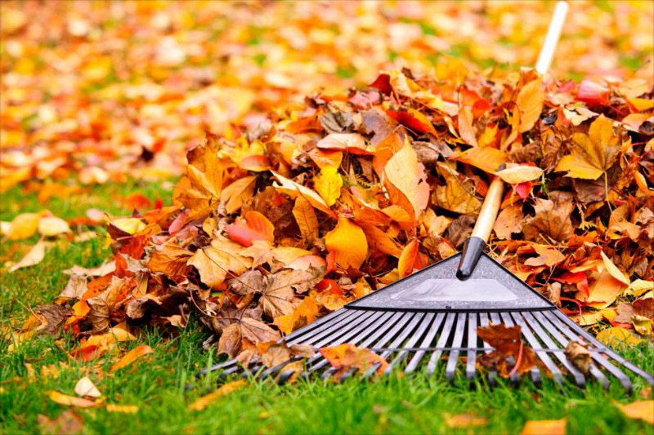 What's Included in a Spring or Fall Clean Up?