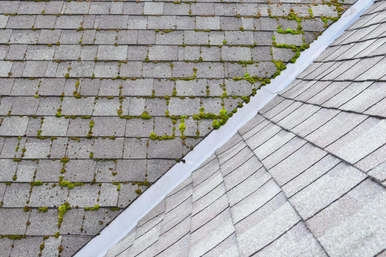 About Roof Moss Treatments
