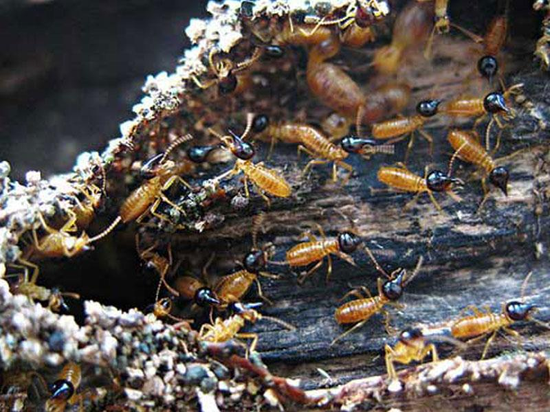 What is a Termite/WDO inspection?