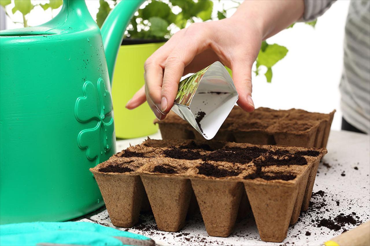 Bulk Seeds & Sets
