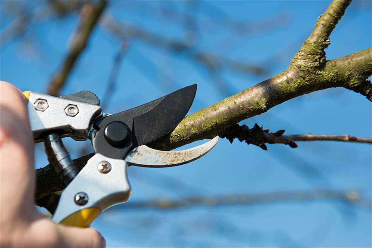 Tree & Shrub Trimming