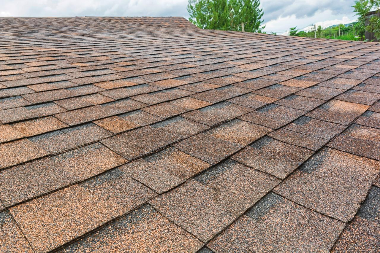 Killing Fungus of the siding and roofs of homes in Pensacola and Gulf Breeze Florida