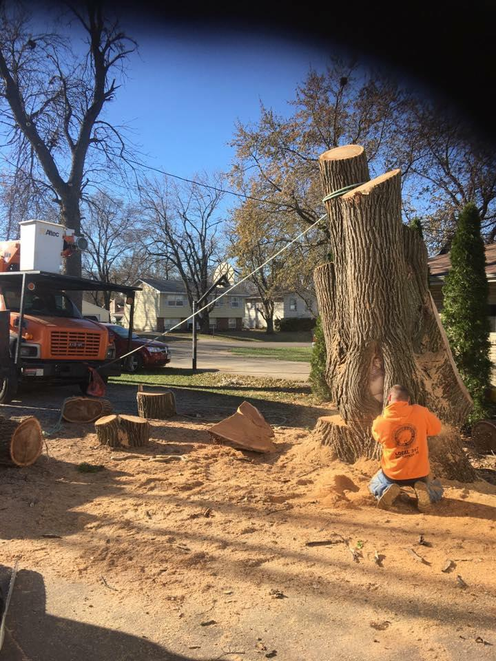 TREE TRIMMING & REMOVAL | STUMP GRINDING