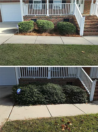 The longer one waits to trim their bushes the harder it will be to shape them into an appealing shape.