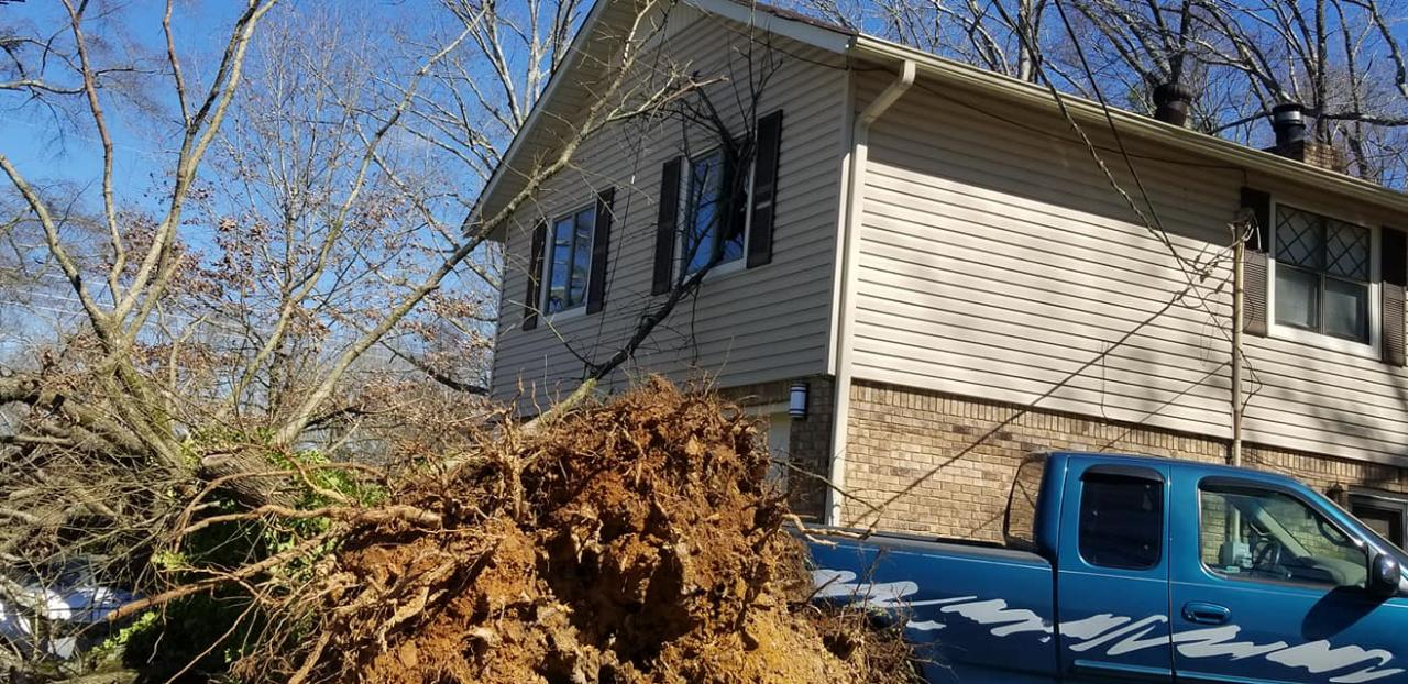 At Briscoe Tree Service, we are experts at storm damage removal.