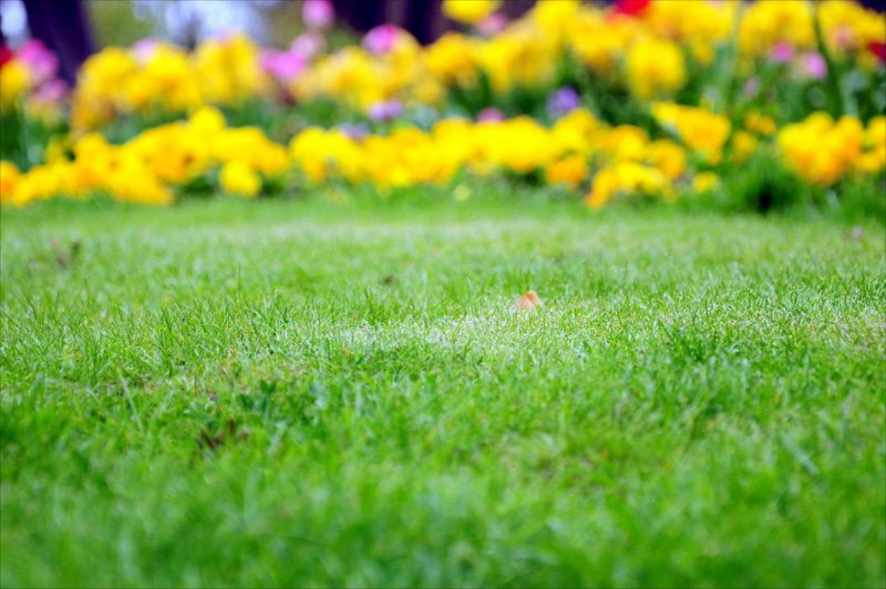 Why Should I Have My Lawn Aerated?